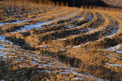 Feld-Beschaffenheiten im Winter Stockfotografie