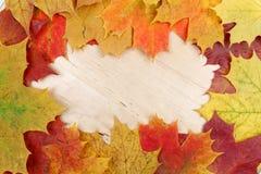 Feld bestanden aus bunten Herbstblättern Stockbilder