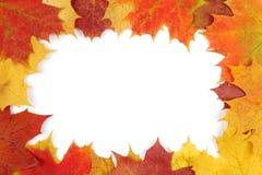 Feld bestanden aus bunten Herbstblättern Lizenzfreie Stockfotos