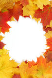 Feld bestanden aus bunten Herbstblättern Stockfoto