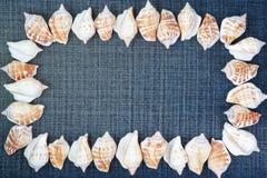 Feld bildete ââof Shells auf den Jeans. Lizenzfreies Stockfoto