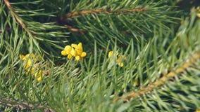 Feld-Blumen in den Kiefern stock footage