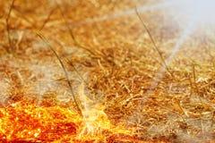 Feld brennt im Sommer durch Dürre Stockbild