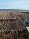Feld der Bambusgefäß- und Bambusbrücke Stockbild