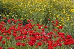 Feld der blühenden Blumen Lizenzfreies Stockfoto