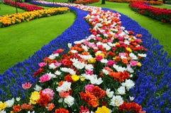 Feld der blühenden Blumen Lizenzfreies Stockbild