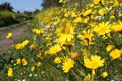 Feld der Blume Lizenzfreie Stockfotografie