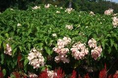 Feld der Blume schön mit Sonnenlicht lizenzfreies stockfoto