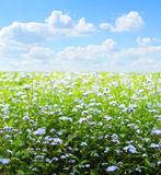Feld der Blumen Stockfoto