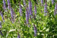Feld der Blumen Lizenzfreies Stockfoto