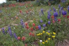 Feld der Blumen Stockbild