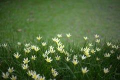 Feld der Blumen Stockbilder