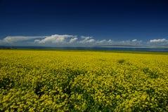 Feld der Blumen Stockfotografie
