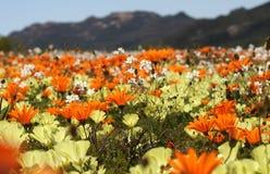 Feld der Blumen Lizenzfreie Stockfotografie