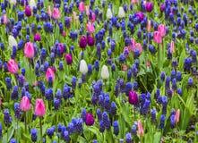 Feld der Blumen im Frühjahr Stockfoto