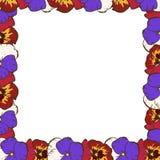 Feld der Blumen Schöner Rahmen von bunten Pansies Bereite Schablone für Ihren Entwurf, Vektorillustration stockfotos