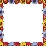 Feld der Blumen Schöner Rahmen von bunten Pansies Bereite Schablone für Ihren Entwurf, Vektorillustration lizenzfreie stockfotos