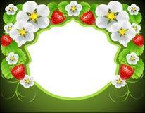 Feld der Blumen und der Erdbeeren Stockfotografie