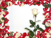 Feld der Blumenblätter lizenzfreie stockfotografie