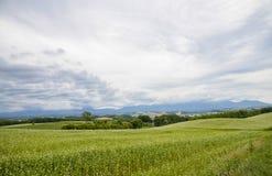 Feld der Blumenkartoffel mit bewölktem Himmel Lizenzfreie Stockfotografie