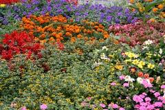 Feld der bunten Blumen stockbilder