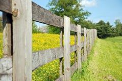 Feld der Butterblumeen stockfotografie