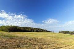 Feld der Ernte Stockbilder