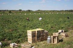 Feld der Erntemaschinen Lizenzfreies Stockbild