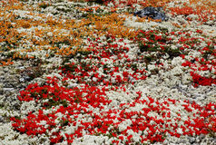 Feld der Fall-Farben Stockbilder