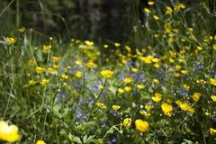 Feld der Frühlingsblumen Lizenzfreies Stockfoto