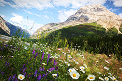 Feld der Gänseblümchen und der wilden Blumen Lizenzfreies Stockbild