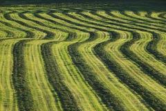 Feld der geernteten Ernte. Stockbild