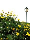 Feld der gelben Blumen mit Lampe Lizenzfreie Stockfotografie