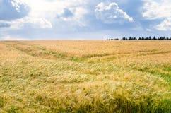 Feld der Gerste und des bewölkten Himmels Lizenzfreie Stockfotografie