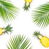 Feld der geschnittenen Ananas und der Palmblätter lokalisiert auf weißem Hintergrund Flache Lage, Draufsicht lizenzfreie stockfotografie