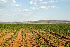 Feld der Getreide Stockfoto