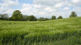 Feld der Getreide stock video footage