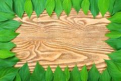 Feld der grünen Blätter Stockfoto