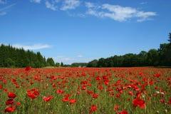 Feld der Mohnblumen lizenzfreies stockbild