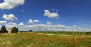 Feld der Mohnblumen Stockfotos