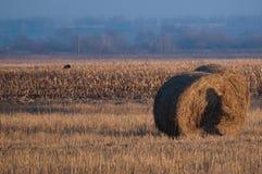 Feld der Molke und des Ballens Strohe Stockfoto