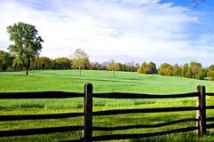Feld in der Morgen-Leuchte Stockbild