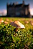 Feld der Pilze Stockfoto