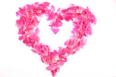 Feld der rosafarbenen rosafarbenen Blumenblätter lizenzfreie stockfotos