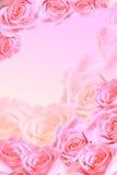 Feld der rosafarbenen Rosen Stockfotografie