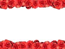 Feld der roten Rosen Stockbild