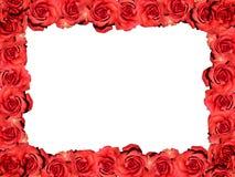 Feld der roten Rosen Stockfotografie