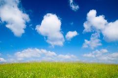 Feld der Sommerblumen lizenzfreie stockfotografie