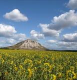 Feld der Sonnenblume Lizenzfreies Stockbild