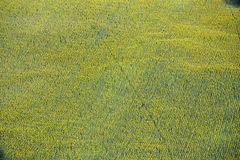 Feld der Sonnenblumen Lizenzfreie Stockfotos